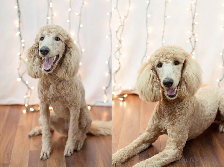 Dog Portrait Photographer02