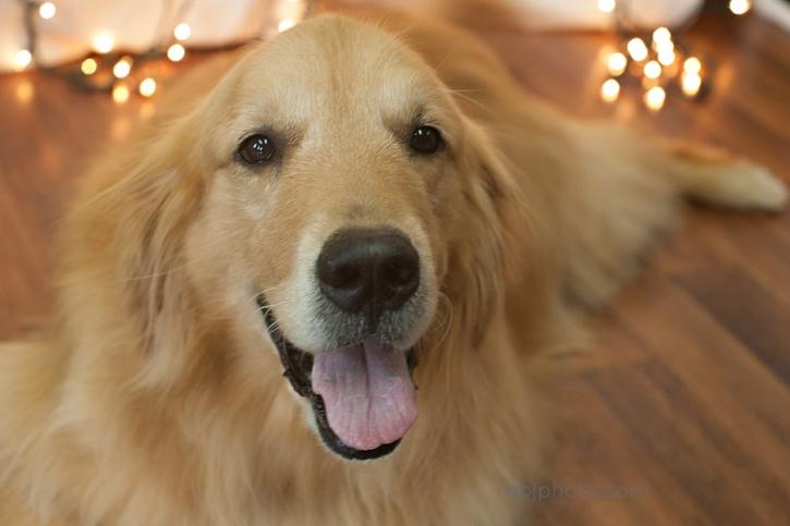 Dog Portrait Photographer03