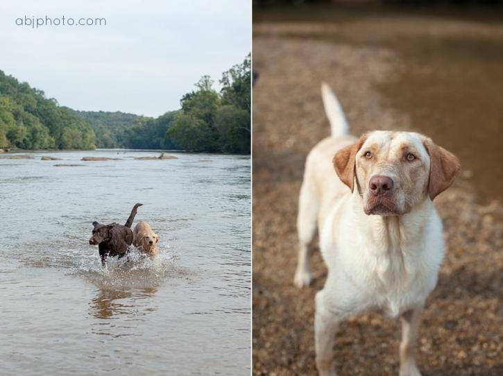 Atlanta Dog Photographer02