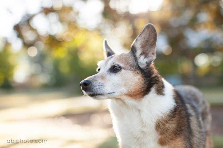 dog portraits atlanta01