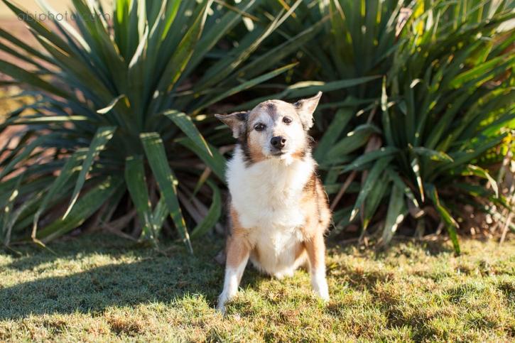 dog portraits atlanta02